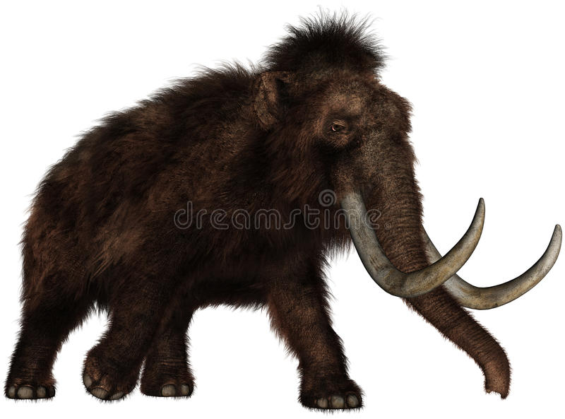 Extinct Woolly mammoth Elephant Isolated. Illustration of an extinct woolly mammoth elephant that once roamed North America. Isolated on white royalty free illustration