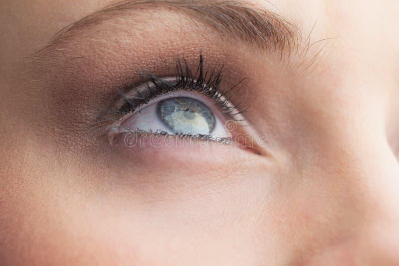 Extrémité étroite sur le bel oeil bleu photo libre de droits