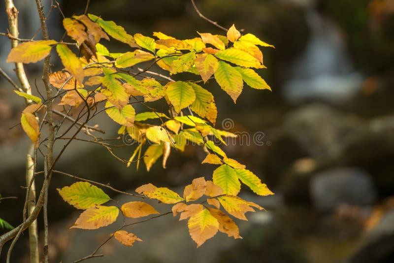 Extrémité d'automnes photographie stock