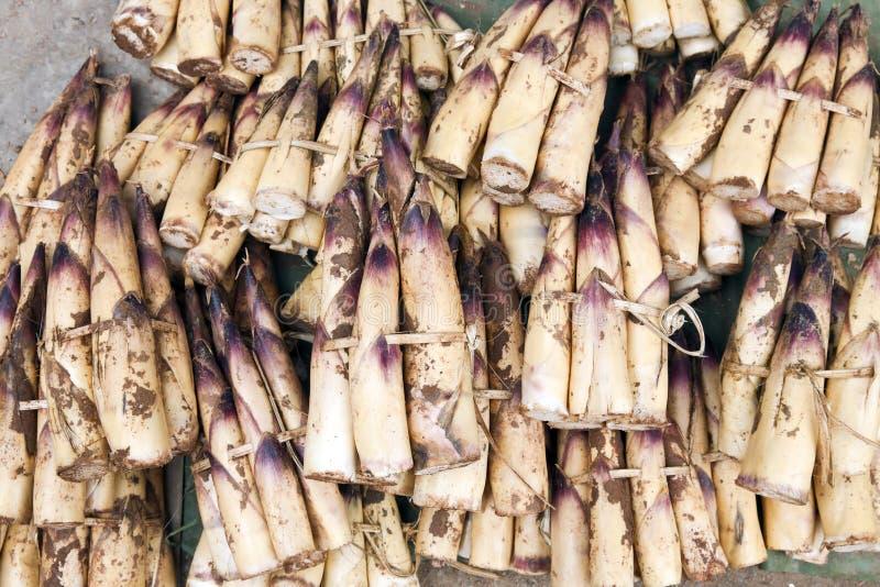 Extrémités de pousse de bambou photos libres de droits