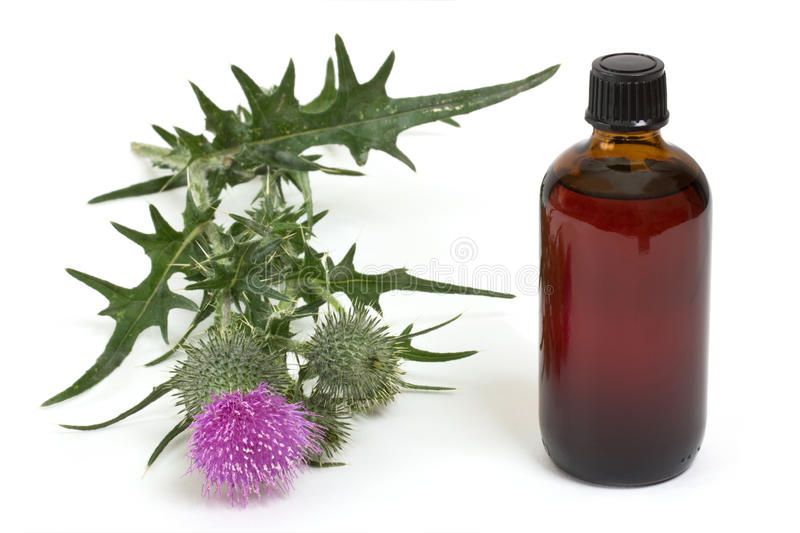 Extract of milk thistle royalty free stock image
