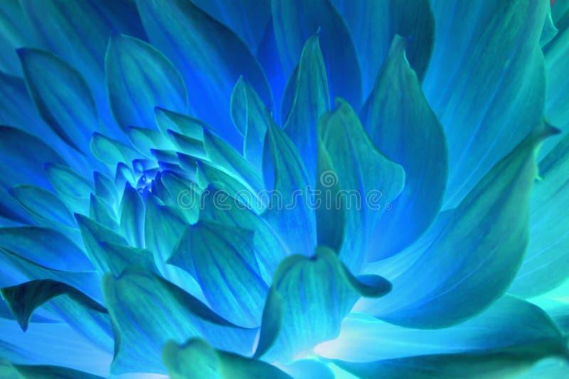 Extracto azul psicodélico de la flor imagen de archivo