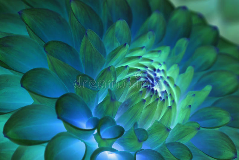 Extracto azul psicodélico de la flor imagenes de archivo