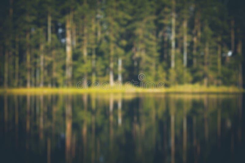 Extracto borroso del bosque imágenes de archivo libres de regalías