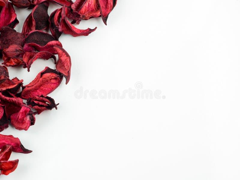 Extracto con los pétalos rojos secados en el fondo blanco foto de archivo