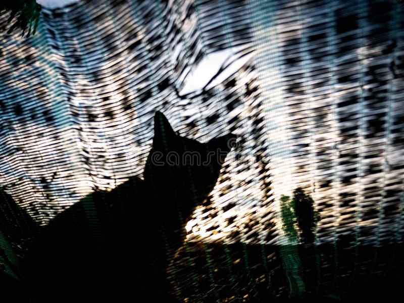 Extracto de Cat Sitting en la red que sombrea imágenes de archivo libres de regalías