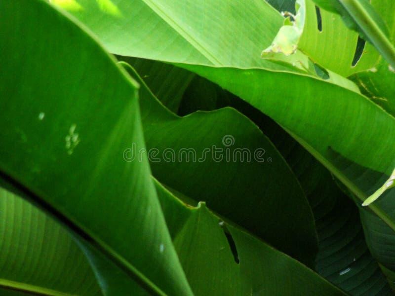 Extracto de hojas tropicales imagen de archivo libre de regalías