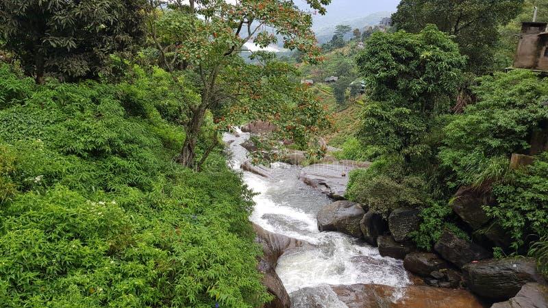 extracto de la cascada del bosque fotos de archivo libres de regalías