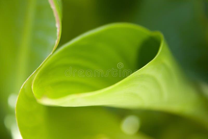 Download Extracto de la hoja foto de archivo. Imagen de hojas, furled - 1284052