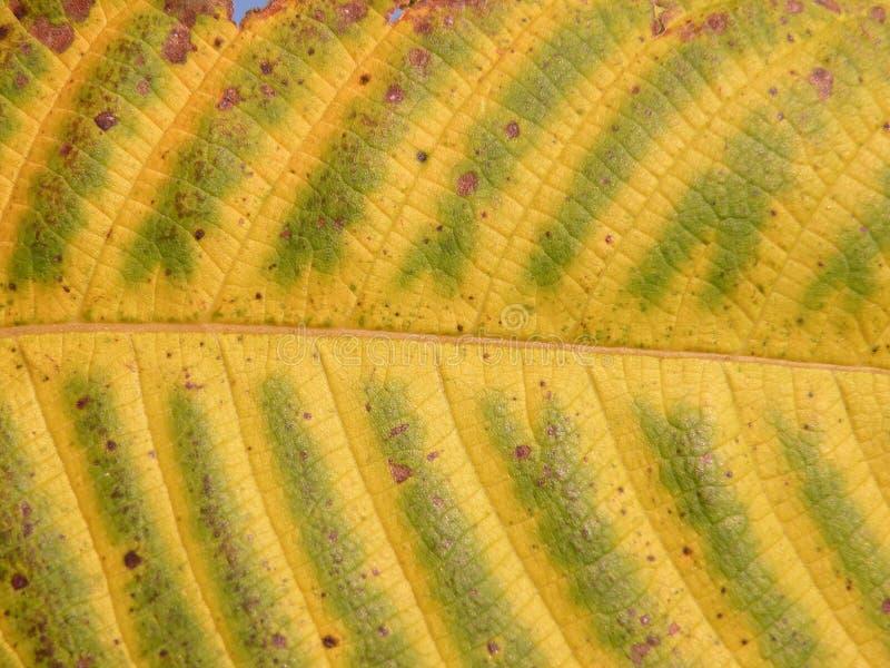 Extracto de la hoja del otoño imagenes de archivo