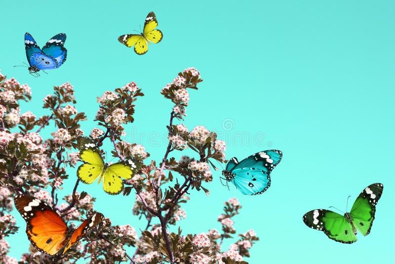 Extracto de la naturaleza de la primavera fotografía de archivo libre de regalías