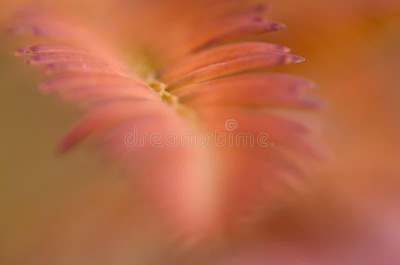 Extracto de la naturaleza - falta de definición suave de Autumn Color imagen de archivo libre de regalías
