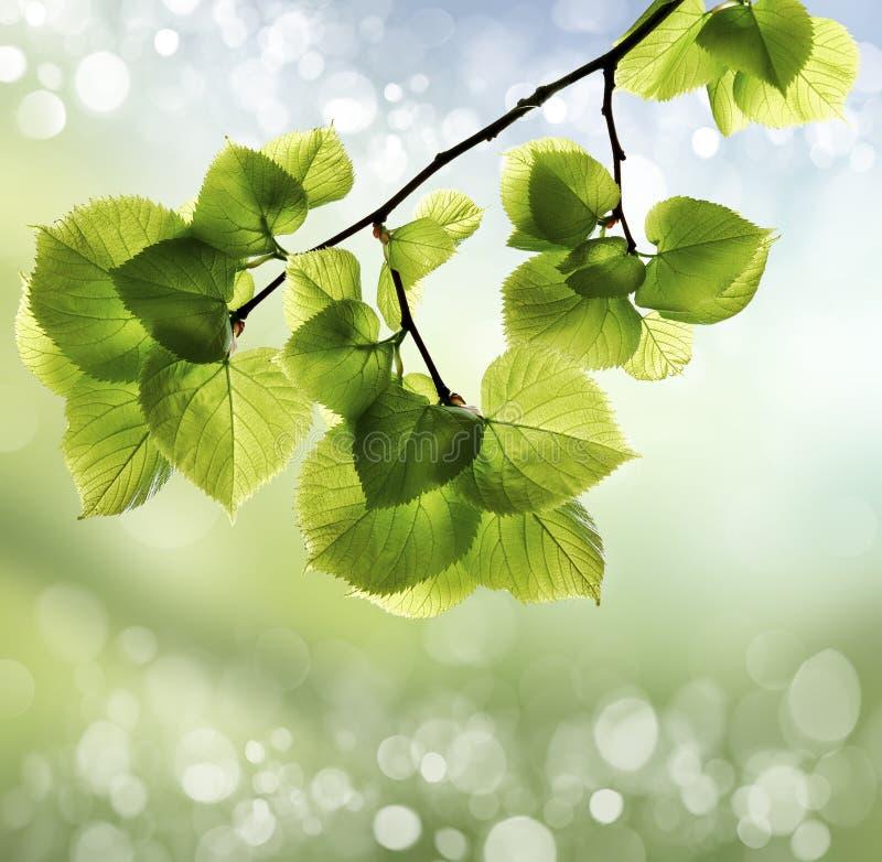 Extracto de la primavera o del calor del verano fotos de archivo libres de regalías