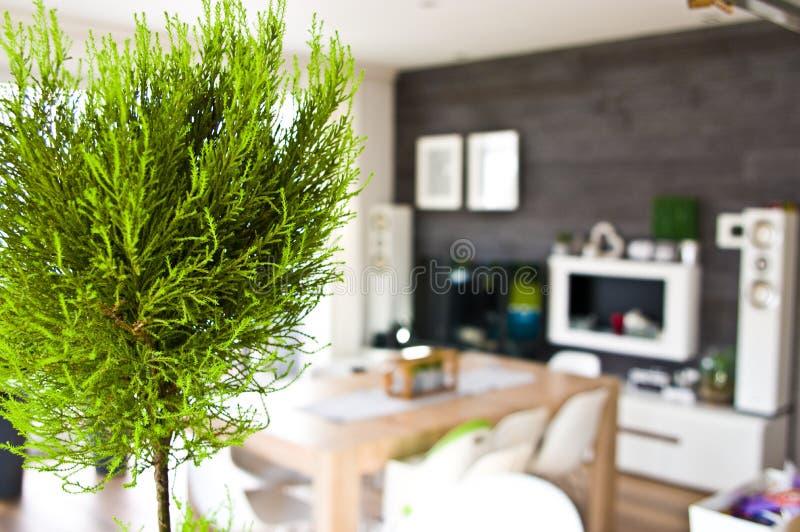 Extracto de la sala de estar con un houseplant enfocado fotografía de archivo