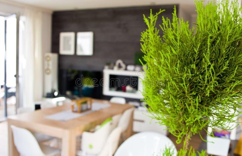 Extracto de la sala de estar con un houseplant enfocado foto de archivo