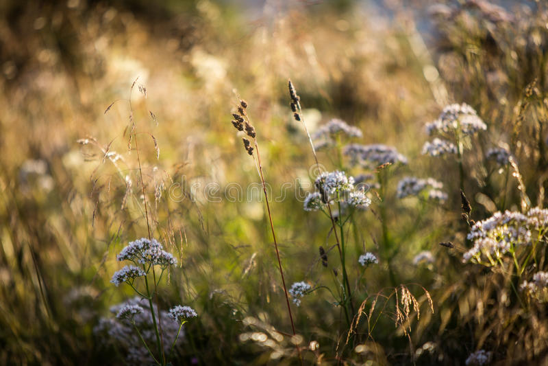 Extracto de las flores salvajes foto de archivo