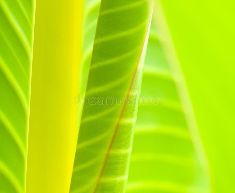Extracto de las hojas imagen de archivo