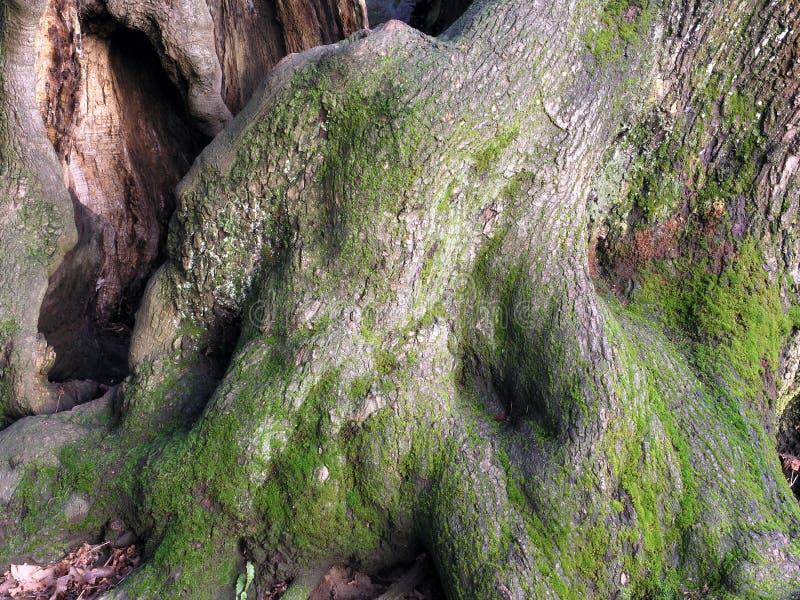 Extracto de las raíces foto de archivo libre de regalías