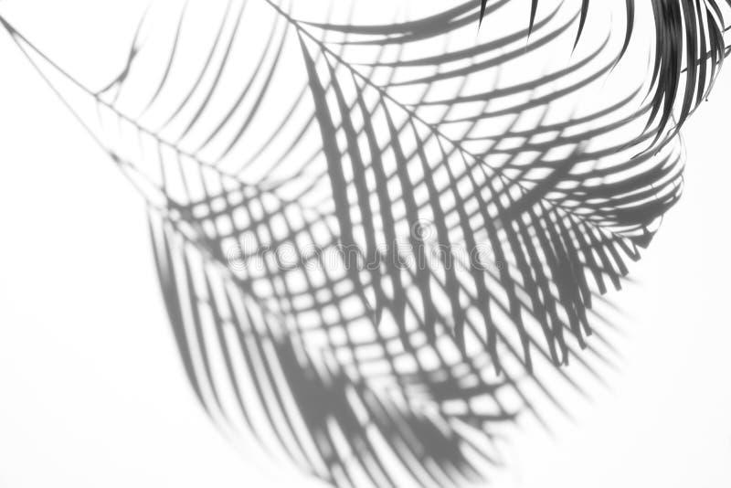 Extracto de las sombras de hoja de palma en un fondo blanco foto de archivo