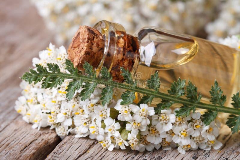 Extracto de milenrama en una botella con las flores en la tabla imagen de archivo