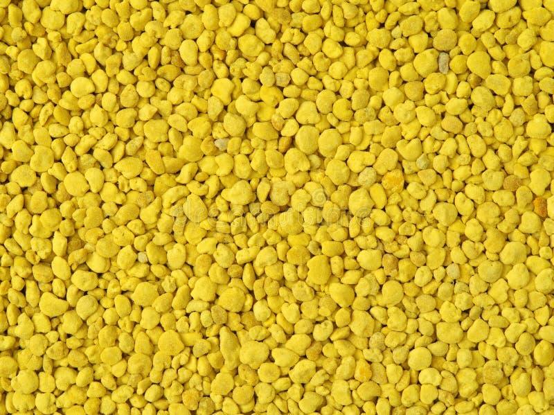 Extracto de oro de los gránulos del polen de la abeja foto de archivo libre de regalías