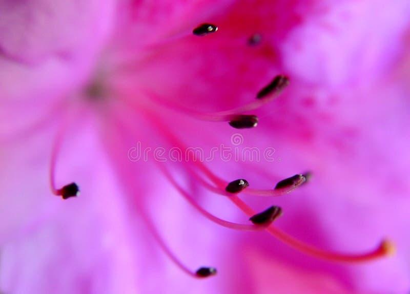 Extracto de una flor fotografía de archivo