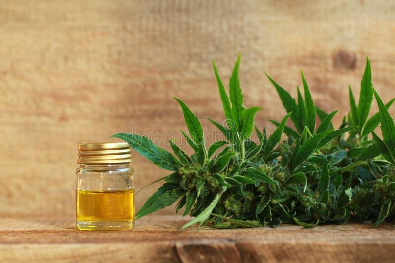 Extracto del aceite del cáñamo y planta médicos del cáñamo imagen de archivo