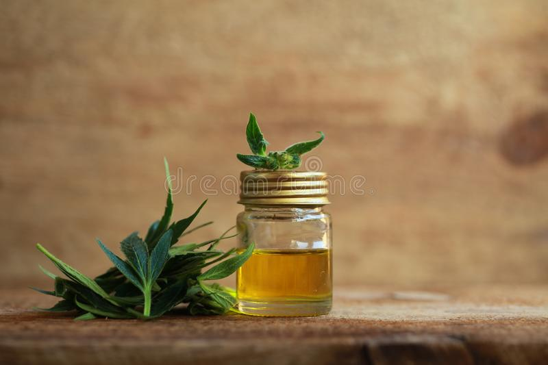 Extracto del aceite del cáñamo y planta médicos del cáñamo foto de archivo