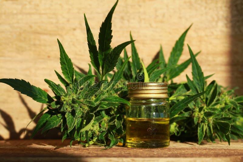 Extracto del aceite del cáñamo y planta médicos del cáñamo fotografía de archivo libre de regalías