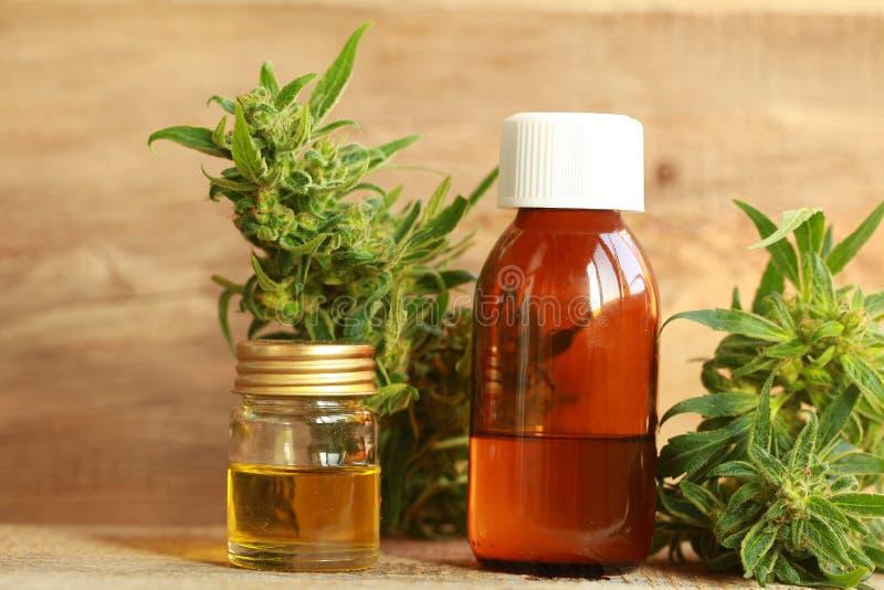 Extracto del aceite del cáñamo y planta médicos del cáñamo imagen de archivo libre de regalías