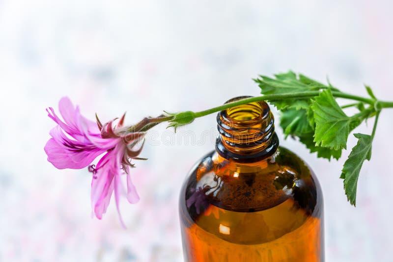 Extracto del aceite esencial del geranio, infusión, remedio, envase del tinte en fondo de madera fotos de archivo