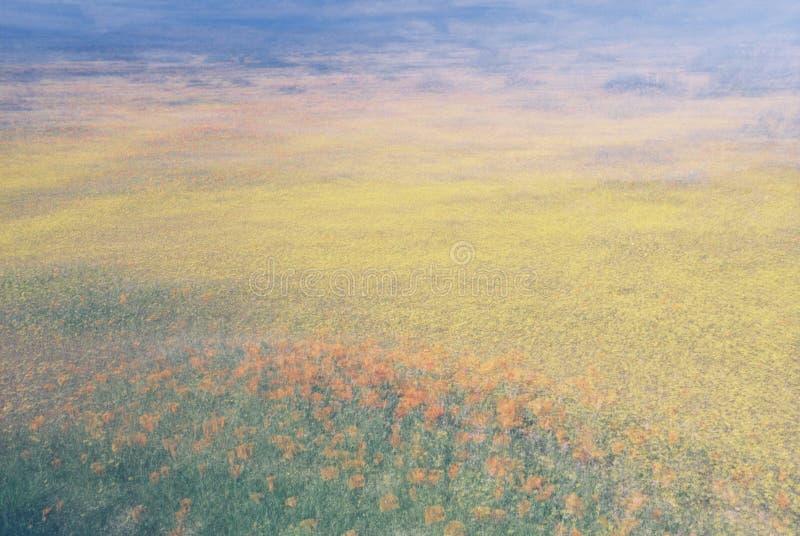 Extracto del campo de flor fotografía de archivo