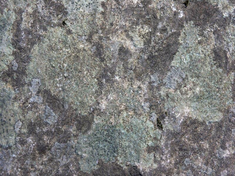 Extracto del liquen y de la roca foto de archivo libre de regalías