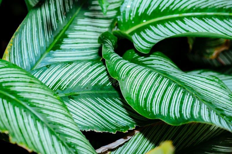 Extracto, fondo de la hoja del verde de la naturaleza y papel pintado hermoso foto de archivo libre de regalías