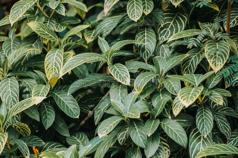 Extracto, fondo de la hoja del verde de la naturaleza y papel pintado hermoso fotografía de archivo libre de regalías