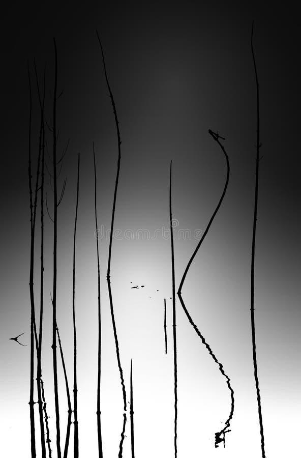 Extracto macro del tiempo de verano de la naturaleza trasera libre illustration