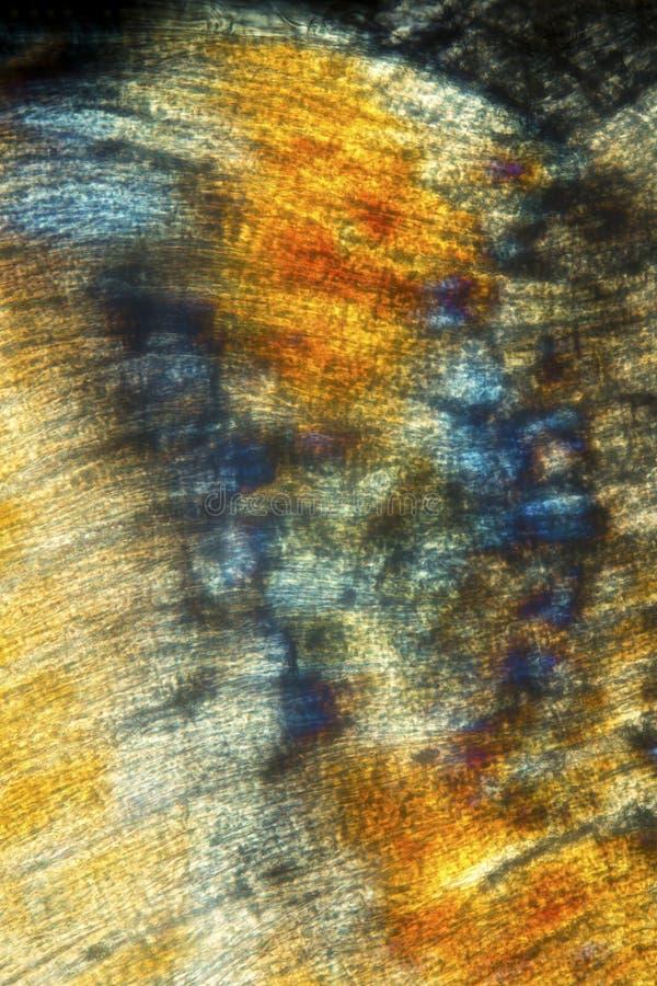 Extracto, micrográfo polarizante del músculo de una lombriz de tierra imagen de archivo