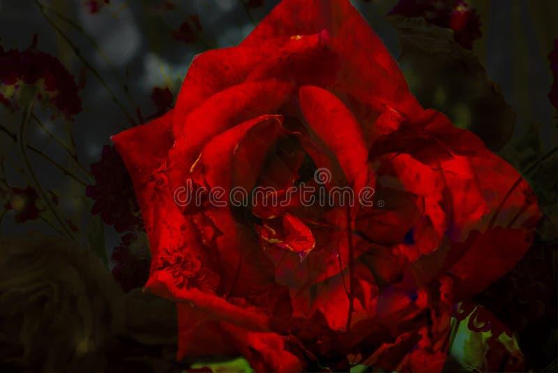 Extracto Rose Flower Patterns con colores vibrantes ilustración del vector
