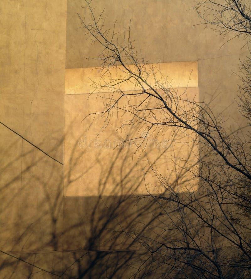 Extracto urbano de la sombra del árbol fotos de archivo