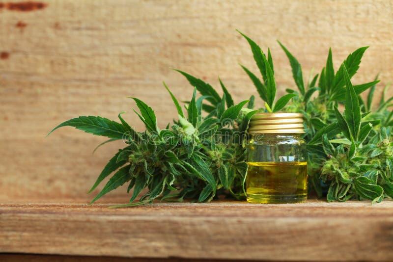 Extrait d'huile de cannabis et usine médicaux de chanvre photos libres de droits