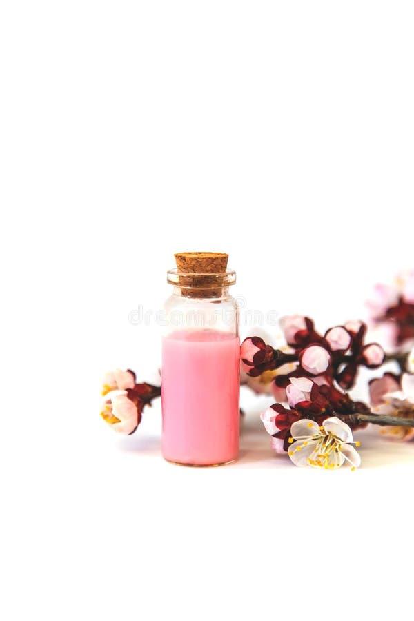 Extrait d'huile essentielle des fleurs d'abricot Foyer s?lectif image stock