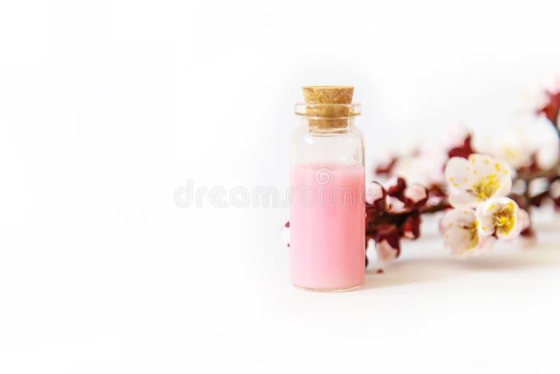 Extrait d'huile essentielle des fleurs d'abricot Foyer s?lectif images stock