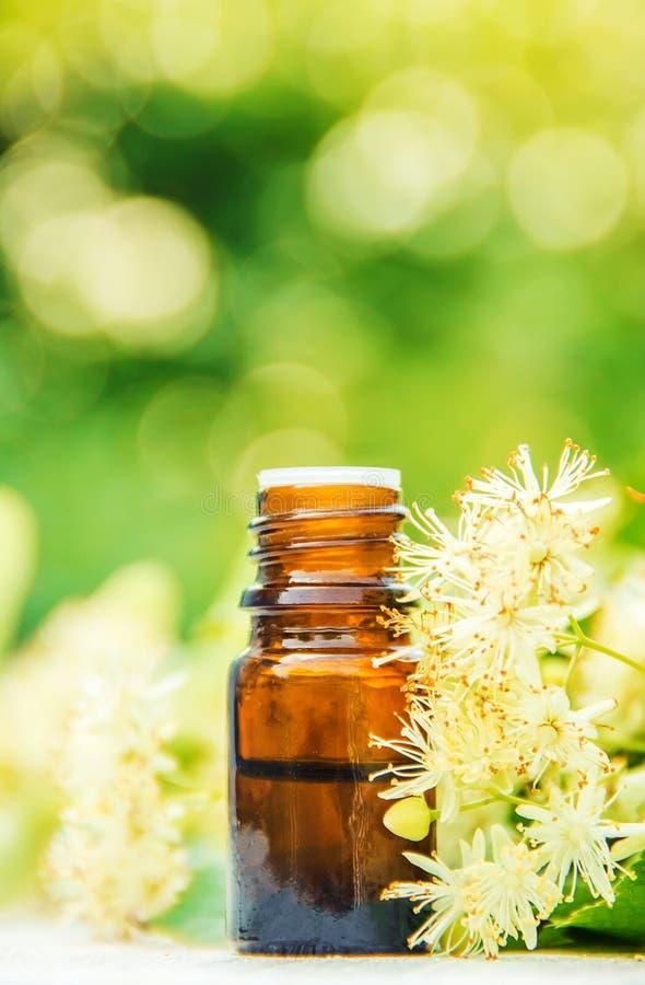 Extrait et fleurs de tilleul dans une petite bouteille photo stock
