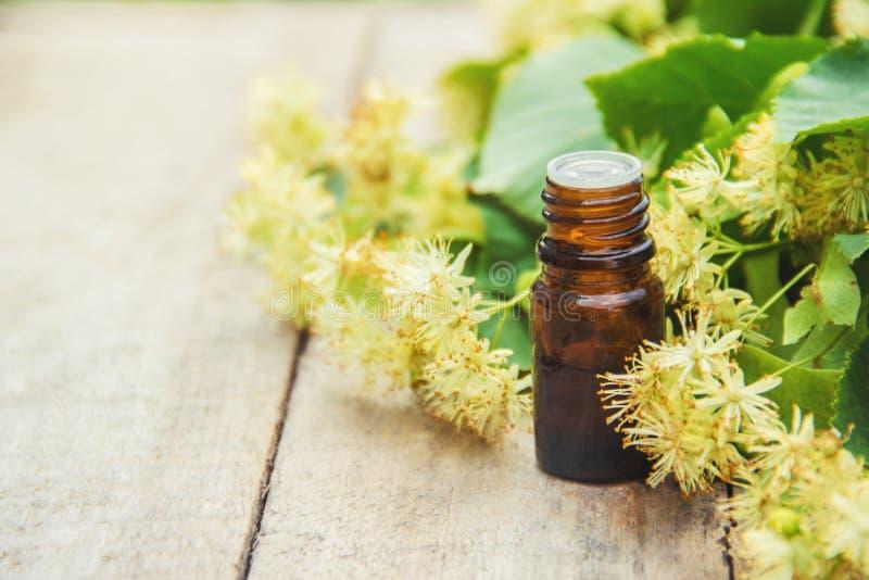 Extrait et fleurs de tilleul dans une petite bouteille photographie stock libre de droits