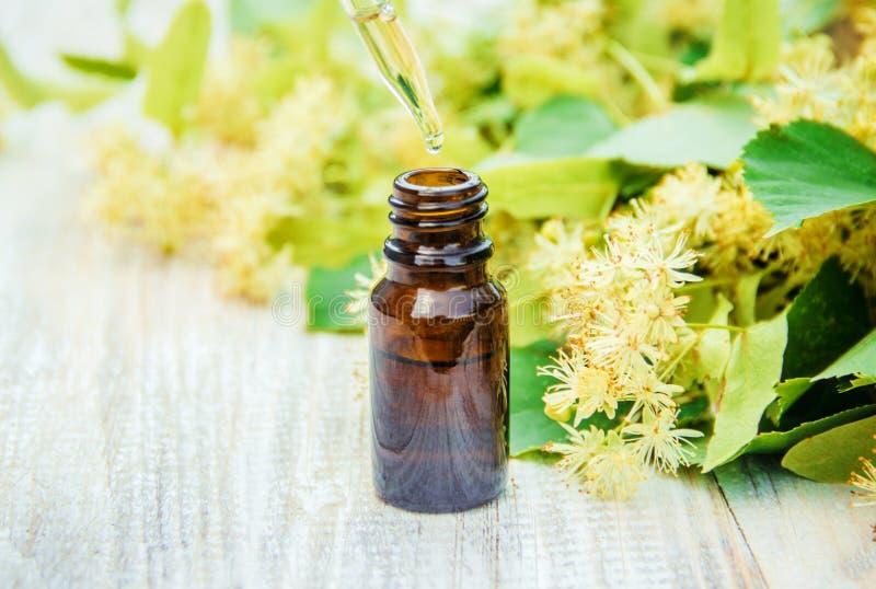 Extrait et fleurs de tilleul dans une petite bouteille image libre de droits