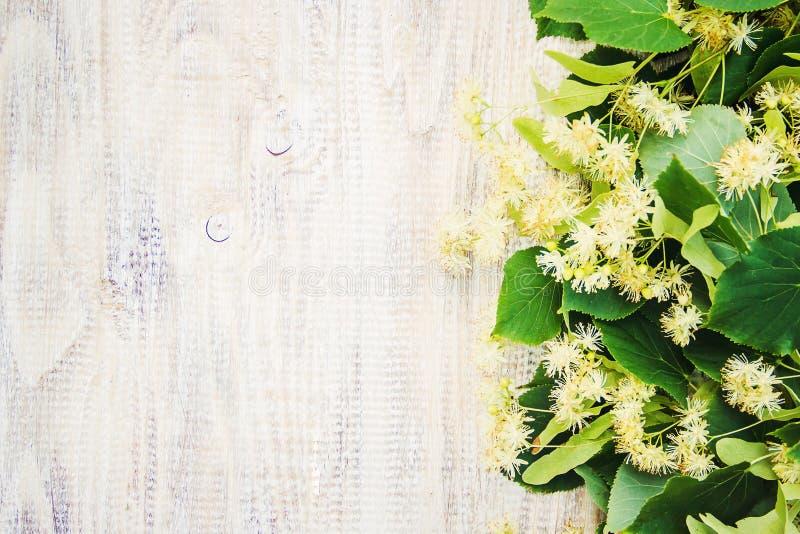 Extrait et fleurs de tilleul dans une petite bouteille photographie stock