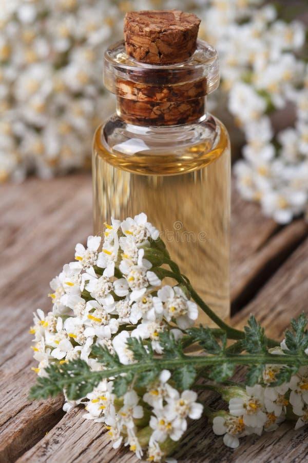 Extrakt av yarrow i en flaska med blommalodlinjemakro royaltyfri fotografi