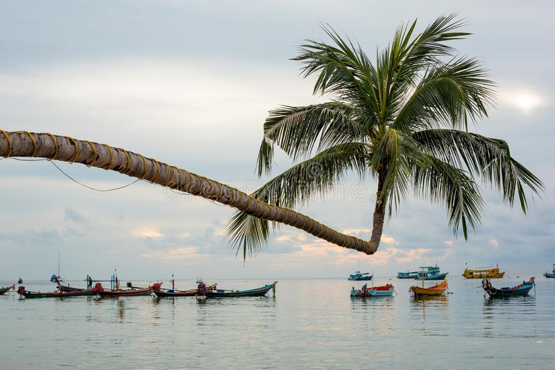 The Extraordinary Coconut Tree at Ko Tao - Chumphon, Thailand. The Extraordinary Coconut Tree at Ko Tao with fishing boat - Chumphon, Thailand stock photo