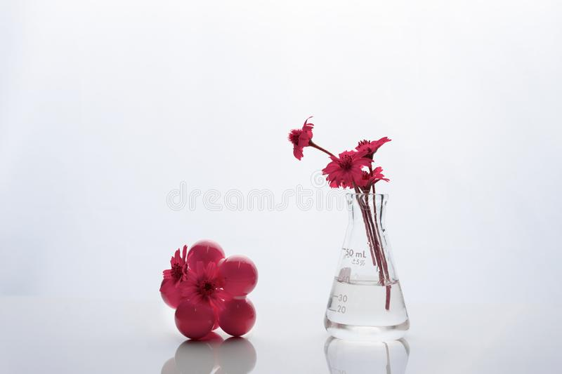 Extraordinary pink flower in biotechnology science glass flask and molecular structure reflection on table background royalty free stock photo