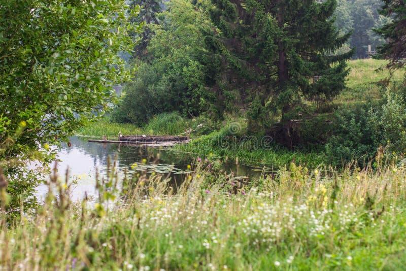 Extraordinary pond. stock image